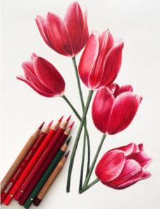 colour pencil shading basic